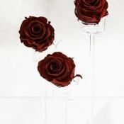 rose san valentino